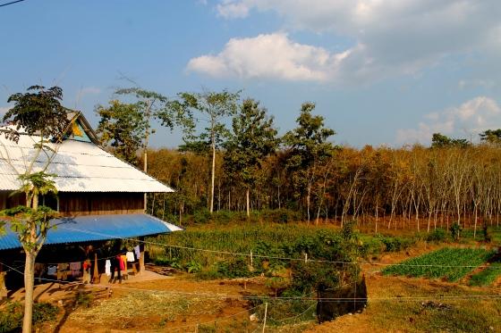 A Dai village, Xishuangbanna